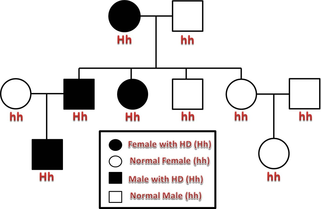 Huntingtons Disease Home – Autosomal Pedigree Worksheet